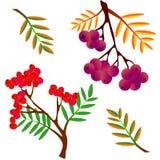 Bezszwowy tło z jagody akwareli rowan ilustracja wektor