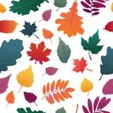 Bezszwowy tło z jesień liścia wzorem Spadku ziele, gałązka na białym tle Dębu i liścia klonowego graient colo ilustracji