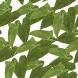 Bezszwowy tło z liścia wektoru ilustracją Fotografia Royalty Free