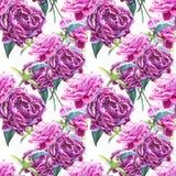 Bezszwowy tło z peonia kwiatami beak dekoracyjnego latającego ilustracyjnego wizerunek swój papierowa kawałka dymówki akwarela Gr Obraz Stock