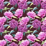 Bezszwowy tło z peonia kwiatami beak dekoracyjnego latającego ilustracyjnego wizerunek swój papierowa kawałka dymówki akwarela Gr Zdjęcie Royalty Free