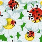 Bezszwowy tło z stokrotkami i dziecka ladybird ilustracja wektor