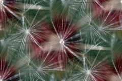bezszwowy tła dandelion Zdjęcia Stock