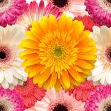 Bezszwowy tło z gerbera kwiatami Obraz Stock