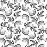 Bezszwowy tapeta wzór z bananami graweruje rysować Owoc Obrazy Royalty Free