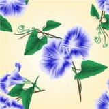 Bezszwowy tekstura ranku chwały wiosny kwiatu błękitny wektor ilustracji