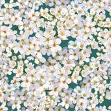 Bezszwowy tło od wiązki kwitnąć wiśnie kwitnie Zdjęcia Stock