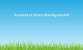 Bezszwowy trawy tło Zdjęcie Stock