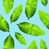 Bezszwowy tropikalny bananów liści wzór na błękitnym tle ilustracji