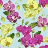 Bezszwowy Tropikalny wzór z Storczykowymi kwiatami Kwiecisty tło dla tkaniny tkaniny, tapeta, Zawija akwarela Obrazy Stock