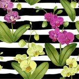 Bezszwowy Tropikalny wzór z Storczykowymi kwiatami Kwiecisty tło dla tkaniny tkaniny, tapeta, Zawija akwarela Obrazy Royalty Free