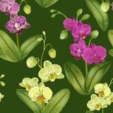 Bezszwowy Tropikalny wzór z Storczykowymi kwiatami Kwiecisty tło dla tkaniny tkaniny, tapeta, Zawija akwarela Zdjęcie Stock
