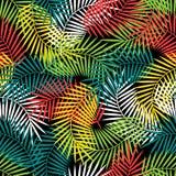 Bezszwowy tropikalny wzór z stylizowanym koksem Zdjęcia Royalty Free
