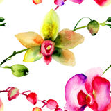 Bezszwowy tupocze z orchidea kwiatami Fotografia Royalty Free
