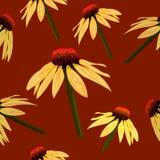Bezszwowy wektoru wzór: kwiaty na brązie, echinacea nakreślenie Zdjęcie Royalty Free