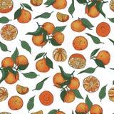 Bezszwowy wektoru wzór tangerines i liście na białym tle cali i obrani ilustracji