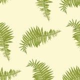 Bezszwowy wektoru wzór z paprociowymi liśćmi ilustracji