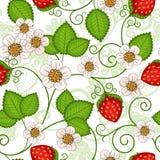 Bezszwowy wiosna wzór Zdjęcie Royalty Free