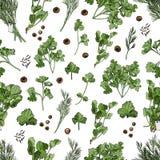Bezszwowy wzór różni ziele i pikantność Ręka rysujący atrament i barwiący nakreślenie odizolowywający na białym tle ilustracji