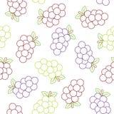 Bezszwowy wzór z colourfull winogronem na białym tle royalty ilustracja