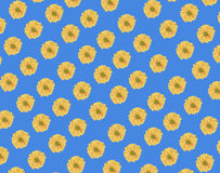 Bezszwowy wzór świeży żółty stokrotka kwiat na błękicie Obrazy Stock