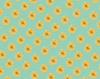 Bezszwowy wzór świeży żółty stokrotka kwiat na zieleni Obraz Royalty Free