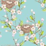 Bezszwowy wzór akwarela ptaka gniazdeczka na gałąź z wiosna kwiatami, ręka rysująca na błękitnym tle royalty ilustracja