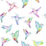 Bezszwowy wzór barwiony colibri ilustracji
