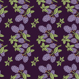 Bezszwowy wzór czernica z gałąź i liśćmi Zdjęcia Royalty Free