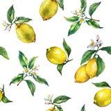 Bezszwowy wzór gałąź świeże cytrus owoc cytryny z zielenią opuszcza i kwitnie royalty ilustracja