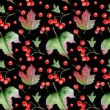 Bezszwowy wzór gałęziaste e jagody viburnum obraz stock
