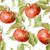Bezszwowy wzór jabłko akwarela Obrazy Stock