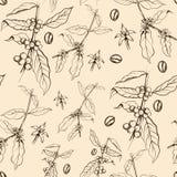 Bezszwowy wzór kawowy drzewo Royalty Ilustracja