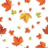 Bezszwowy wzór liścia tło Zdjęcia Royalty Free