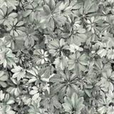 Bezszwowy wzór, liście, lato, czerń, biel, popielaty, upał, Flor obraz stock