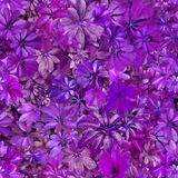 Bezszwowy wzór, liście, lato, fiołek, upał, flora, tapeta ilustracji