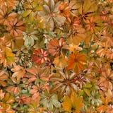 Bezszwowy wzór, liście, lato, pomarańcze, upał, flora, tapeta zdjęcia stock
