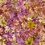 Bezszwowy wzór, liście, lato, zieleń, purpura, upał, flora, wa royalty ilustracja