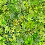 Bezszwowy wzór, liście, lato, zieleń, upał, flora, tapeta wzór, wzór dla tkanin, pocztówka, nikt, wizerunek, fotografia, des obraz royalty free