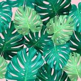 Bezszwowy wzór liścia monstera Zdjęcie Stock