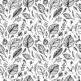 Bezszwowy wzór od ręka remisu struktury liście czerni na bielu w kreskowej sztuce ilustracji