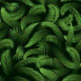 Bezszwowy wzór, palma liście Obrazy Stock