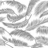 Bezszwowy wzór palmowy liść na białym odosobnionym tle Wektorowy tło dla tapet, karty, tkaniny, tkanina, odziewa, pr Obrazy Royalty Free