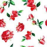 Bezszwowy wzór róże w akwareli zdjęcie royalty free