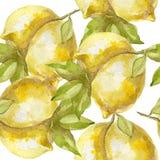 Bezszwowy wzór słodka soczysta cytryny akwarela Fotografia Stock