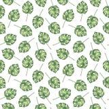 Bezszwowy wzór tropikalni monstera palmy liście Fotografia Royalty Free
