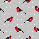 Bezszwowy wzór w polki kropce z gilem Ornament dla tkaniny i opakowania Zdjęcia Royalty Free