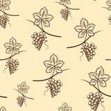 Bezszwowy wzór winogrono Rocznika wektor Obrazy Royalty Free