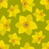 Bezszwowy wzór z żółtymi daffodils na oliwnym tle royalty ilustracja