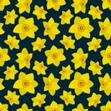 Bezszwowy wzór z żółtymi daffodils na zmroku - błękitny tło ilustracji